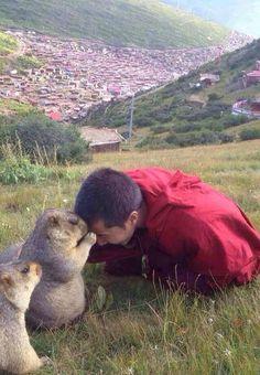 チベット仏教の思想は動物まで伝えわっている気がする。可愛くて見るだけで平和を感じさせる。世界の人々。