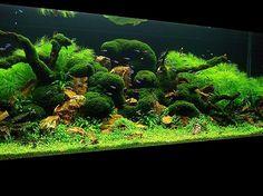 """Mystical Forest"" 2008 AGA Aquascaping Contest Winner #freshwater #aquarium"