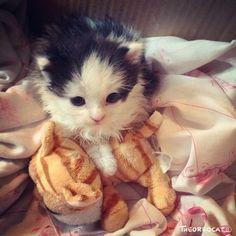 So adorable kitten @yummypets