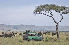 Mara Serena Safari Lodge Hotel in Masai Mara Kenya via http://www.cheaphotelsinmap.com/cheapHotelDetails.xhtml?discountHotelName=Mara_Serena_Safari_Lodge_Masai_Mara #travel #ttot