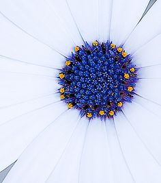 ♥ heart of the flower...pretty!