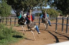 Emu Riding. Don't care what it costs.