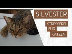 Silvester stressfrei für Katzen gestalten - Tipps und Tricks - Coco und Nanju Animals, Videos, Parenting, Tips And Tricks, Animales, Animaux, Animal, Animais