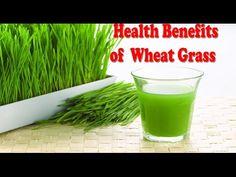 गेहूँ की घास के फ़ायदे, Health Benefits of wheatgrass Juice for weight loss…