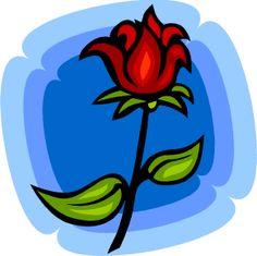 Valentines Rose.