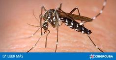 #725 000 personas mueren cada año por la picada de un mosquito - CiberCuba: CiberCuba 725 000 personas mueren cada año por la picada de un…
