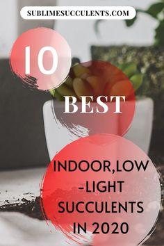Check out our compilation for the best low-light succulents for indoor gardening. Here are your options for easy and low-maintenance plants that are perfect to keep indoors. Find your options on this pin! #succulents #lowlightsucculents #indoorgardening #outdoorgardening #gardeningtips Low Light Succulents, Flowering Succulents, Indoor Succulents, Succulent Planter Diy, Succulent Care, Cacti And Succulents, The More You Know, Are You The One, Indoor Gardening