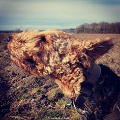 I like it windy!
