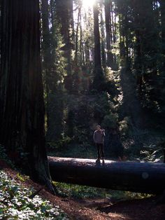 Sequoia Park, (Eureka) (Humboldt County)