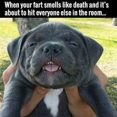 They Have No Idea. #lol #haha #funny