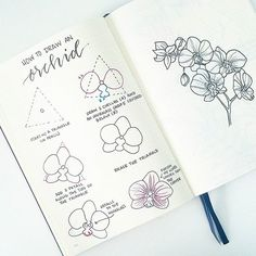 how to draw an orchid! On the left are the individual steps, and on the right I was playing around with drawing a whole branch. I LOVE seeing your drawings, so keep tagging me and/or using the hashtag ☺ . GO CHECK OUT ANOTHER AMAZING TUTORIAL BY ! Orchid Drawing, Floral Drawing, Plant Drawing, Flower Drawing Tutorials, Flower Sketches, Flower Drawings, Drawing Flowers, Drawing Tips, Flower Drawing Tutorial Step By Step