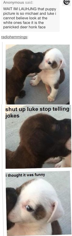 Hahahahahahahaha awwwwwwwwwe <<< Minus the fact that I don't get the 5SOS joke lol this is freakin' adorable ♡