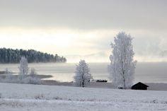 Frosty morning   Flickr - Photo Sharing!