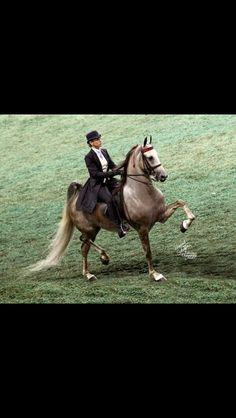 Love grey Saddlebreds!