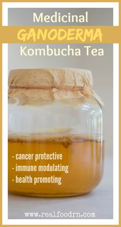 Medicinal Ganoderma Kombucha. How to brew a healthy probiotic tea that has a special ingredient, making it cancer protective, immune modulating and health promoting! realfoodrn.com #kombucha #gandoderma