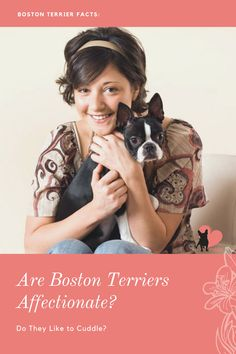 Wondering where your Boston Terrier falls: a cuddler or not? #bostonterrier #bostonterrierbehaviour #bostonterrierpersonality #bostonterriertemperament #bostonterriercuddle #bostonterrierlove #bostonterrieraffectionate #bostonterrierowner #owningabostonterrier #dogbodylanguage #dogbehaviour #doglove #dogbond #dogbonding #dogmom #dogowner