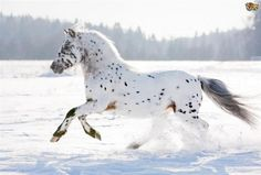 horses with great hair