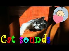 Cat sounds | Cat meowing | Purring | Animal sounds for children to learn - YouTube