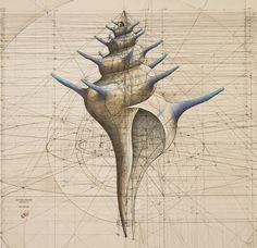 Rafael Araujo ilustraciones matematicas 2