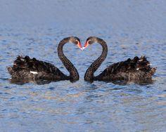 valentine's day urdu poetry
