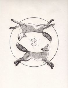 Fox & Cube