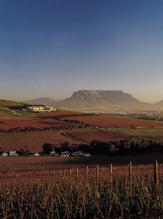 Durbanville Wine Valley and Table Mountain. Cape Town, South Africa.