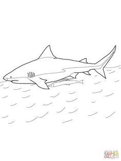 Sand Tiger Shark Sharks Pinterest Shark and Tigers