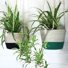 Add some greenery to your home with these unique hanging planters! Our hanging planters are available in three different sizes. To adjust the heights, just tie as many knots as needed.  Mia Mélange planters are made from 100% cotton rope which we carefully sew together in a coiling technique. The cotton is grown locally in South Africa by farmers who are members of the Better Cotton Initiate (BCI). Cotton Rope, Hanging Planters, Indoor Garden, Potted Plants, Farmers, In The Heights, Greenery, South Africa, Knots