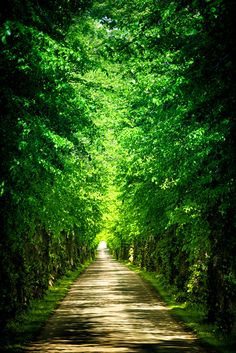 Green passage (by Pierre Pocs)