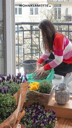 In diesem Beitrag findet Ihr hilfreiche Tipps, wie Ihr zu Beginn des Frühlings Euren Balkon mit Pflanzen und Blumen gestalten könnt. Außerdem geben wir Ratschläge, wo welche Pflanzen gedeihen und wie Ihr sie vor Frost schützt. Solar Licht, Budget, Cleanse, Blog, Health, Balcony House, Balcony Lighting, Exotic Plants, Cut Flowers