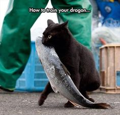 Picture # 190 collection funny animals pictures pics) for December 2015 – Funny Pictures, Quotes, Pics, Photos, Images and Very Cute animals. I Love Cats, Cute Cats, Funny Cats, Funny Animals, Cute Animals, Cat Fun, Crazy Cat Lady, Crazy Cats, Photo Chat