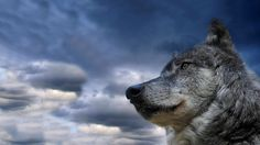 wolf_muzzle_dog_sky_view_meditation_53072_1920x1080.jpg (1920×1080)