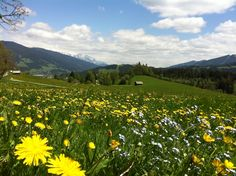 Springtime in Flachau/Austria Salzburg, Spring Time, Austria, Vineyard, National Parks, Earth, Mountains, Nature, Outdoors