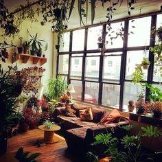 Plants everywhere.