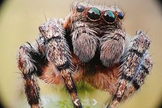 Nature Photography Jumping Spider Close Up Spider Art