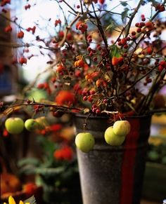 crab apples, hawthorne berries and rose hips