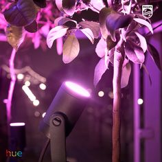 Experience the impact of color in your garden with the Philips Hue Lily spot light. Visit our website for our wide range of smart indoor and outdoor lighting fixtures. Outdoor Garden Lighting, Outdoor Light Fixtures, Smart Lighting System, Types Of Lighting, Lighting Ideas, Landscape Lighting Design, Colorful Garden, Solar Lights, One Light