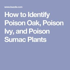 How to Identify Poison Oak, Poison Ivy, and Poison Sumac Plants