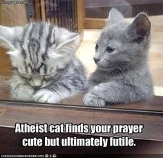 Atheist cat...  Makes as much sense as talking snake, imaginary cloud people, et al...