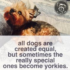 Only the very, very special ones! Found at: https://itsayorkielife.com/only-the-very-very-special-ones/ #Yorkies,#YorkshireTerrier,#Yorkielove,#ItsaYorkieLife