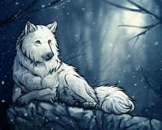 how to draw a white wolf