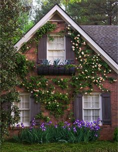 love houses with plants across the outside.