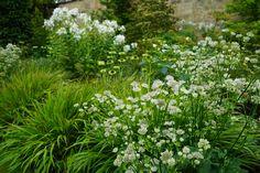 Phlox, astrantia and hakanakkers planting by Angel Collins Garden Design