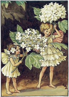 E҉nglish I҉dylls — pagewoman: The Guelder Rose Fairies by Cicely...