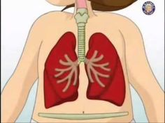 Go inside the human body and see first-hand how the respiratory system works. The Human Body, Human Body Science, Human Body Unit, Human Body Systems, Science Biology, Teaching Science, Science For Kids, Science Activities, Life Science