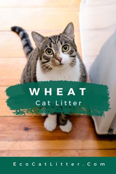 Which is the BEST natural cat litter that clumps? We compare the pros and cons of four types of natural clumping litter to find out! Natural Cat Litter, Best Cat Litter, Automatic Litter Box, Cat In Heat, Clumping Cat Litter, Cat Scratching Post, Cat Care Tips, Pet Beds, Cat Gif