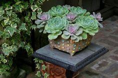 Cómo regar las plantas en maceta - http://www.jardineriaon.com/como-regar-las-plantas-en-maceta.html