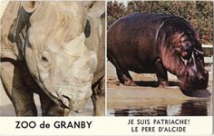 Hippopotamus, Animals, Vintage, Wild Animals, Dog, Cards, Animaux, Animal, Vintage Comics