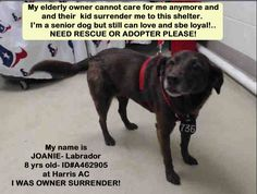 ~~dies today Thurs 07/07/16!!!!~~HOUSTON - Houston, Save Lives is our Mission at County of Harris: Veterinary Public Health. 15 hrs · **SENIOR ALERT!! SWEET JOANIE IS GOING TO BE EU TOMORROW EVENING IF NOBODY STEP UP ON TIME TO ADOPT OR RESCUE, SHELTER EXTENDED UNTIL 07/08 ONLY!** this is another heartbreaking reality, elderly pet owners who can't be able to care for their pets and NONE in their family can't make a room for them...this is what Joanie is facing now, she was surrender by the…