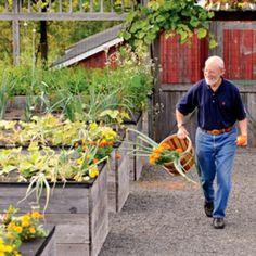 Jerry Finkelstein grows vegetables on beds raised so high, they are practically a tabletop buffet. Raised Beds, Raised Garden Beds, Raised Gardens, Raised Planter, Organic Gardening, Gardening Tips, Herb Garden Design, Sensory Garden, Homestead Gardens